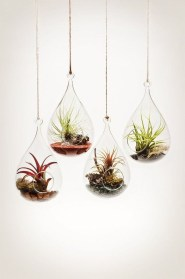 Beautiful Plant Decors For Your House 22