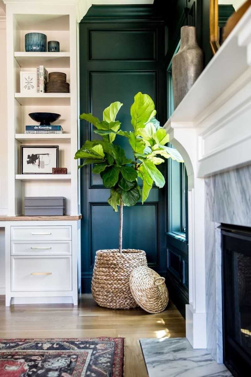 Beautiful Plant Decors For Your House 32