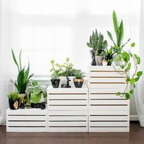 Beautiful Plant Decors For Your House 40