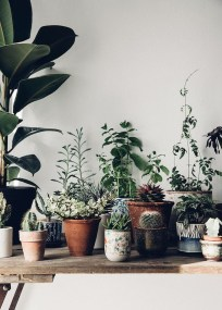 Beautiful Plant Decors For Your House 42