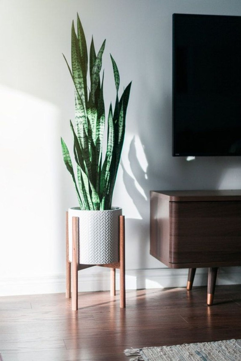 Beautiful Plant Decors For Your House 43