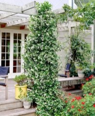 Beautiful Facades With Vines And Climbers 16