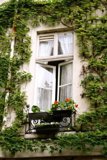 Beautiful Facades With Vines And Climbers 27