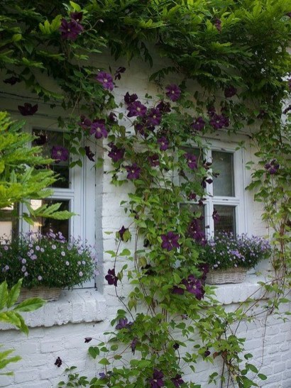 Beautiful Facades With Vines And Climbers 31