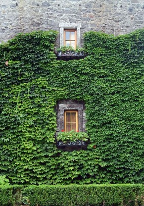 Beautiful Facades With Vines And Climbers 43