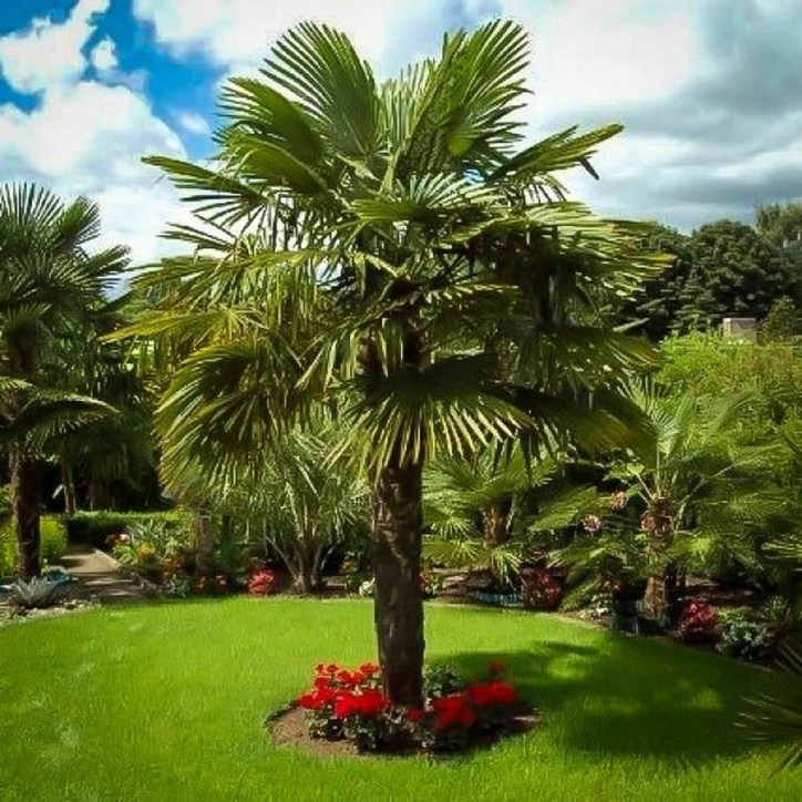 Cute Palm Gardening Ideas For Front Yard 39