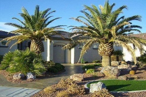 Cute Palm Gardening Ideas For Front Yard 49