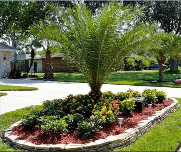 Cute Palm Gardening Ideas For Front Yard 53