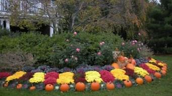 Incredible Autumn Decorating Ideas For Backyard 11