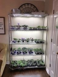 Magnificient Indoor Decorative Ideas With Plants 02