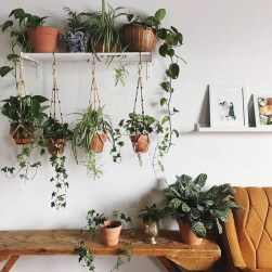 Magnificient Indoor Decorative Ideas With Plants 03