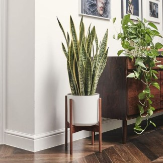 Magnificient Indoor Decorative Ideas With Plants 09