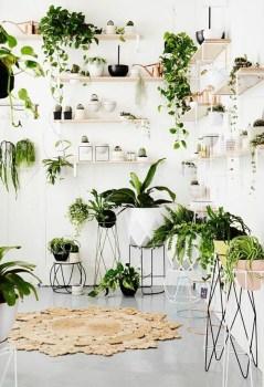 Magnificient Indoor Decorative Ideas With Plants 16