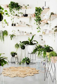 Magnificient Indoor Decorative Ideas With Plants 16