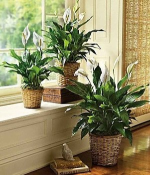 Magnificient Indoor Decorative Ideas With Plants 18