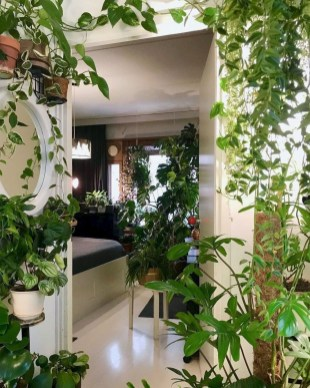 Magnificient Indoor Decorative Ideas With Plants 25