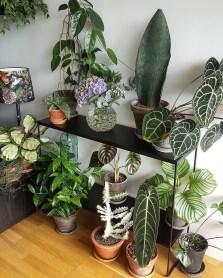 Magnificient Indoor Decorative Ideas With Plants 32