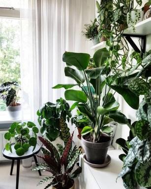 Magnificient Indoor Decorative Ideas With Plants 34