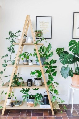 Magnificient Indoor Decorative Ideas With Plants 36