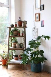 Magnificient Indoor Decorative Ideas With Plants 40