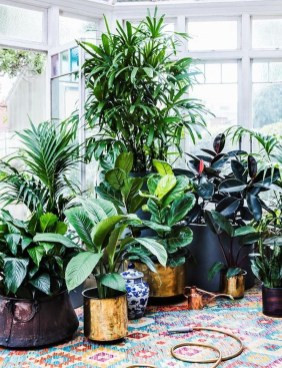 Magnificient Indoor Decorative Ideas With Plants 44