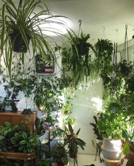 Magnificient Indoor Decorative Ideas With Plants 45