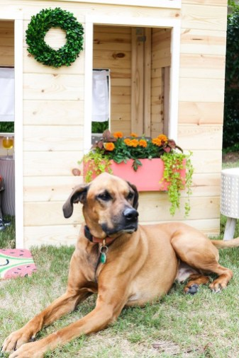 Comfy Diy Backyard Projects Ideas For Your Pets 07