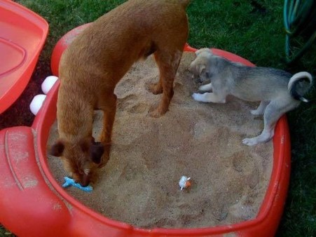 Comfy Diy Backyard Projects Ideas For Your Pets 15