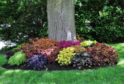 Adorable Flower Beds Ideas Around Trees To Beautify Your Yard 07