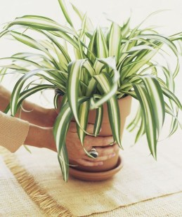 Rustic Houseplants Design Ideas That Are Safe For Animals 10