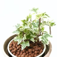 Rustic Houseplants Design Ideas That Are Safe For Animals 42
