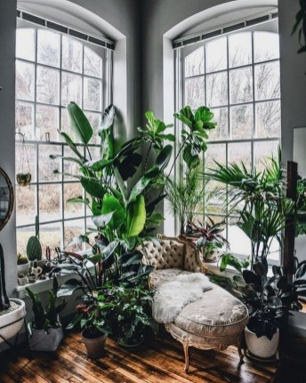 Lovely Window Design Ideas With Plants That Make Your Home Cozy 15