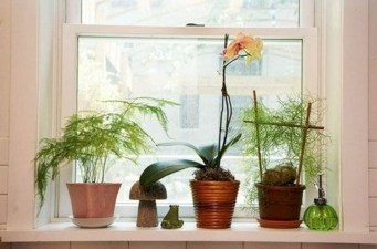 Lovely Window Design Ideas With Plants That Make Your Home Cozy 16