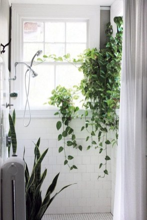 Lovely Window Design Ideas With Plants That Make Your Home Cozy 39