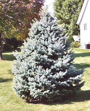 Pretty Christmas Front Yard Landscaping Ideas05