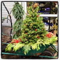Pretty Christmas Front Yard Landscaping Ideas27