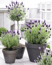 Adorable Porch Planter Ideas That Will Give A Unique Look36