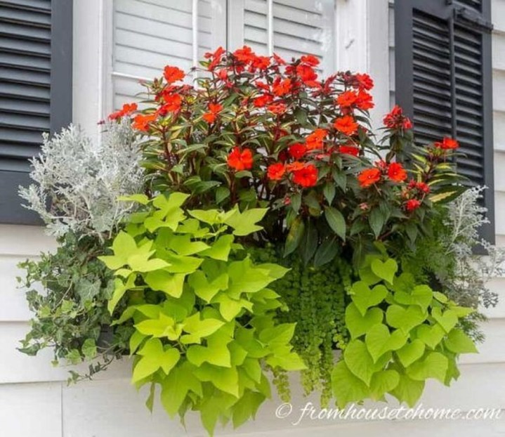 Wonderful Flower In Pots Ideas For Your Window37