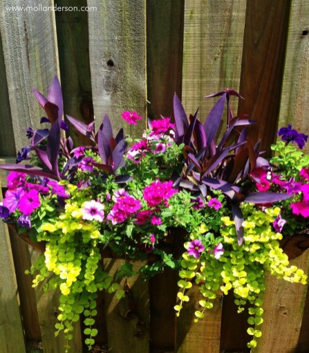 Wonderful Flower In Pots Ideas For Your Window38