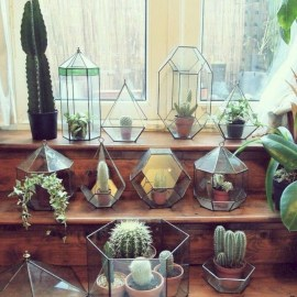 Cool Small Cactus Ideas For Interior Home Design01