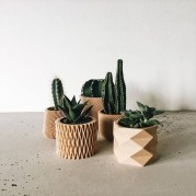 Cool Small Cactus Ideas For Interior Home Design04