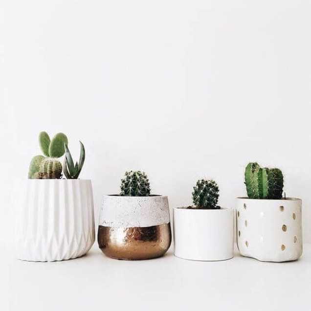 Cool Small Cactus Ideas For Interior Home Design49