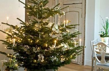 Lovely Live Potted Christmas Trees Ideas