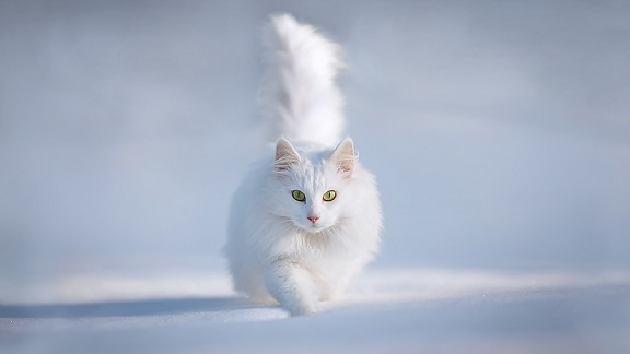 Cats can run 30 miles per hour
