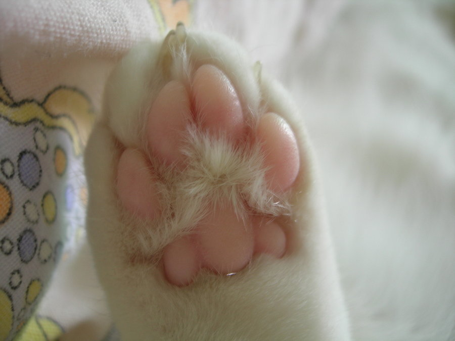 Cats can smell with their paws