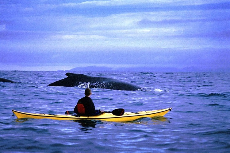 Kayaking with whales in Alaska