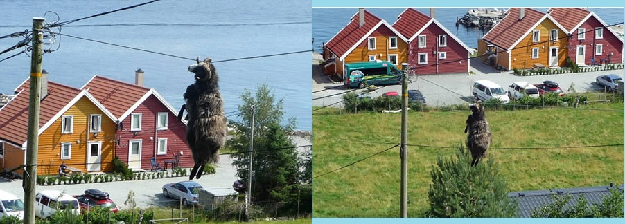 Sheep Abseiled Down Electricity Cable After Snagging Its Horn