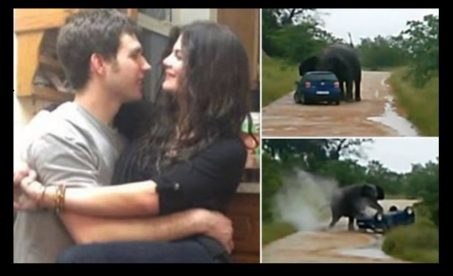 The elephant who tossed a British tourist's car during safari