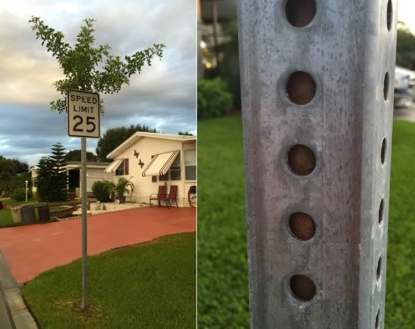 The tree that found its way and grew through a traffic sign