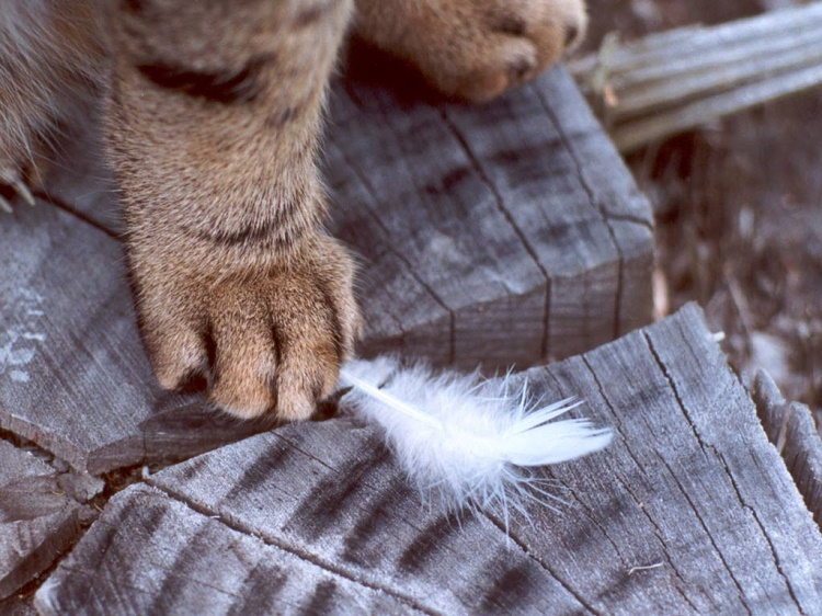 Declawing often leads to biting problems